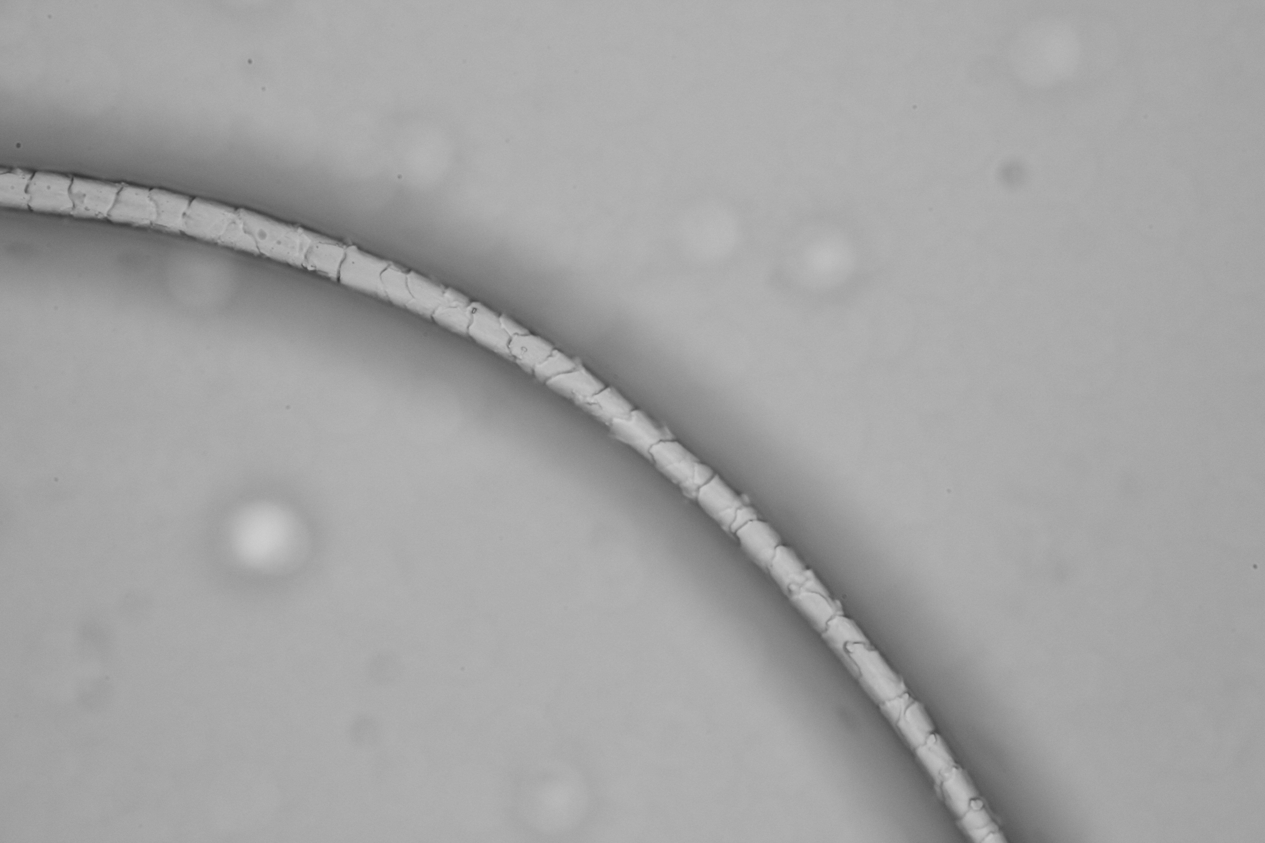 羊毛羊绒显微图片观察(进口显微镜及KL成像系统)2