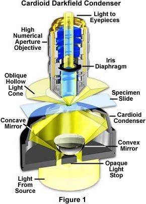 奥林巴斯显微镜|暗场奥林巴斯显微镜的照明